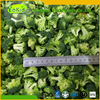 Cheap Wholesale Supply Chinese Iqf Frozen Green Broccoli