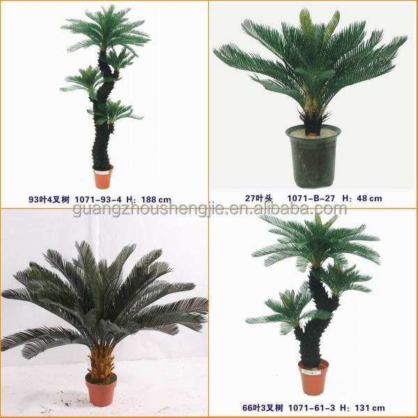 Nombres plantas de interior poto with nombres plantas de - Plantas de interior nombres ...