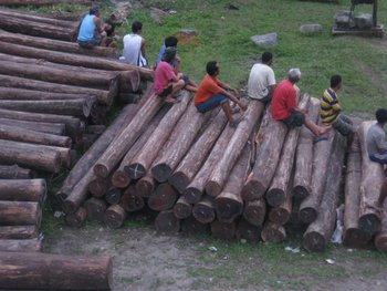 Gmelina Logs,Mahogany Logs And Falcata Logs