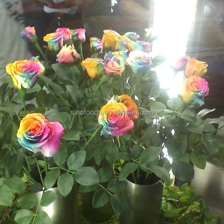 rose flower seeds flower seeds plants