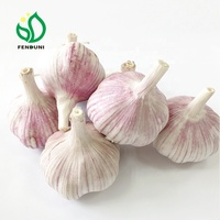 Normal White Garlic Price (Purple Garlic / Red Garlic) for export