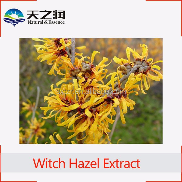 Pure witch hazel skin care ingredients powder