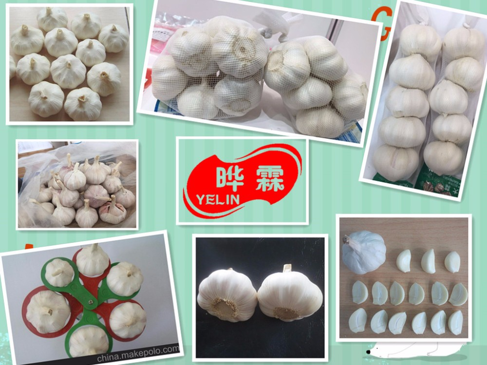 Chinese China garlic