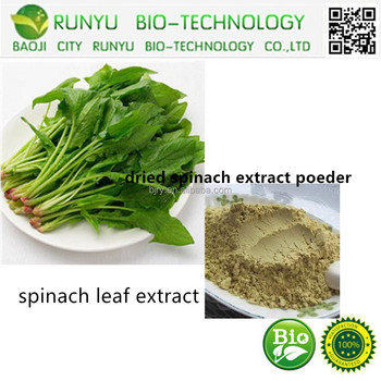 High quality 100% natural dried spinach extract powder