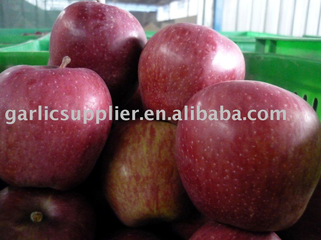Shanxi huaniu apple crop 2010