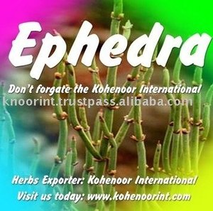ephedra, ephedra Suppliers and Manufacturers at Alibaba com