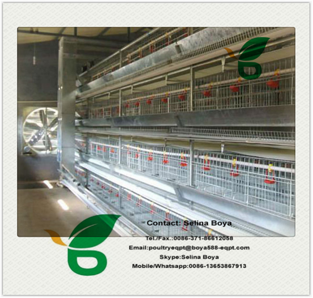 Poultry farm equipment automatic battery design layer/broiler chicken cage