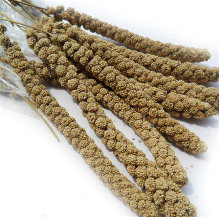 Gu sui Best price herb medicine red/yellow millet sprays bird seed
