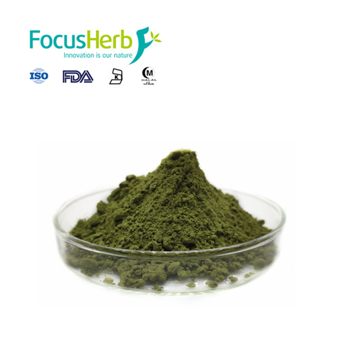 Green Matcha Tea, Matcha Powder Organic - 4uTea | 4uTea.com