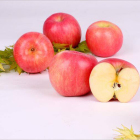 Apples Fruit Apple Bulk Fresh Fuji Apples Fruit Wholesale Size 130/140/150 G