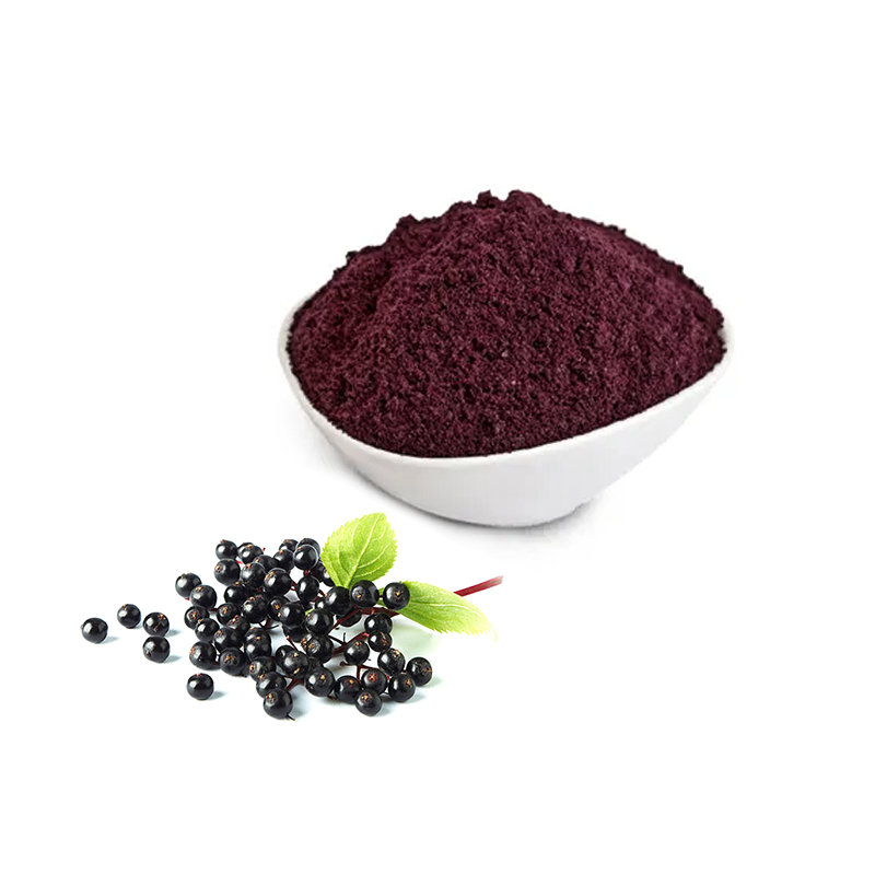 Top quality organic 25% anthocyanins black elderberry extract <strong>powder</strong>