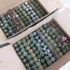/product-detail/perennial-mini-cactus-mixed-different-kinds-4-5cm-cactus-plants-for-sale-1600085675243.html