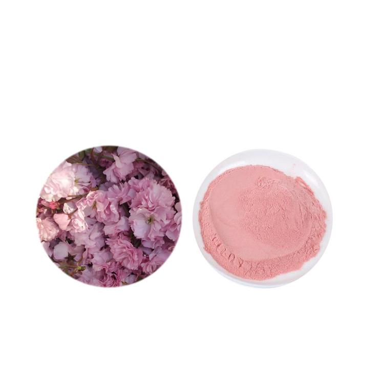 Fornecimento de fábrica 100% pure baixo preço sakura em pó/pó do extrato da flor de cerejeira