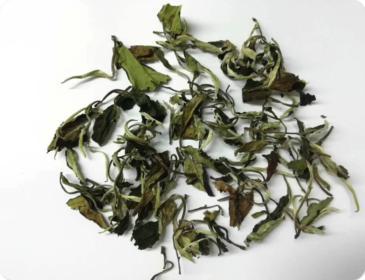Yunnan Moonlight White tea chinese high quality organic tea - 4uTea | 4uTea.com
