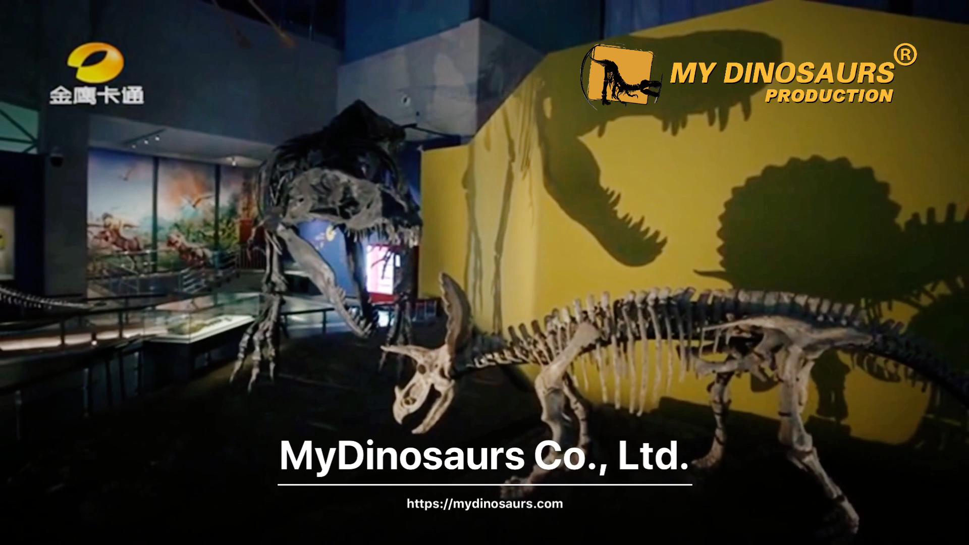 MEIN DINO DS099 Museum Qualität Fiberglas Dinosaurier Skelett für Ausstellung
