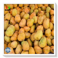 Factory Vietnam High Quality Food Organic Natural Dried Fruit Mango with Certificate SGS - HACCP From Wahapy Vietnam
