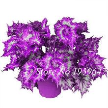 Красивая Искусственная бегония цветы 100 с розами подарок для домашнего сада вечерние украшения(Китай)
