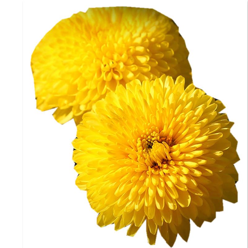 Chinese Natural Health Care Flower Tea Chrysanthemum Flowers Tea - 4uTea | 4uTea.com