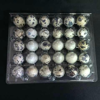 Factory Supply Clear Disposable Quail Egg Blister Packaging Tray