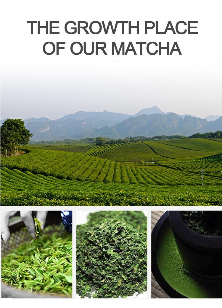 100% Natural Matcha Power Organic Healthy Greet Tea Help Detox OEM and Private Label Matcha Tea - 4uTea | 4uTea.com
