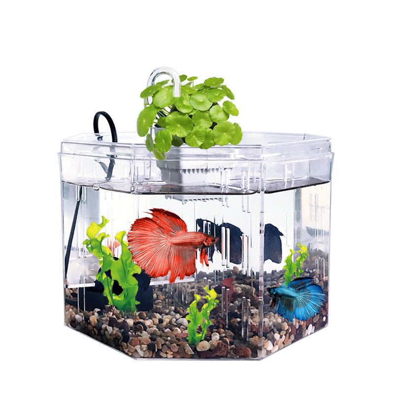Aangepaste aquarium fish tank polygon clear acryl aquarium