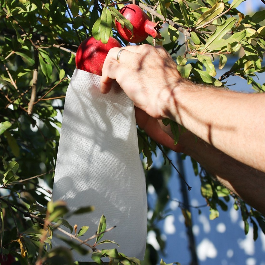 Factory direct environmental protection agricultural PP non-woven fruit bag without pollution