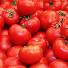 <span class=keywords><strong>Tomates</strong></span> <span class=keywords><strong>fraîches</strong></span>, Douce Méditerranée <span class=keywords><strong>Tomates</strong></span> Rouges, 2019 Récolte...