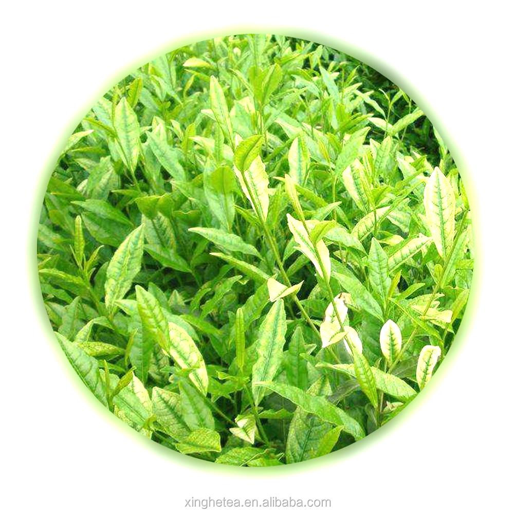 green tea bags Anti-cancer Angie White Tea - 4uTea | 4uTea.com