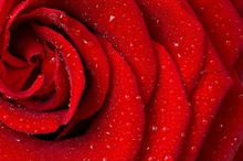 Фон для фотосъемки на День святого Валентина LIFE MAGIC BOX(Китай)