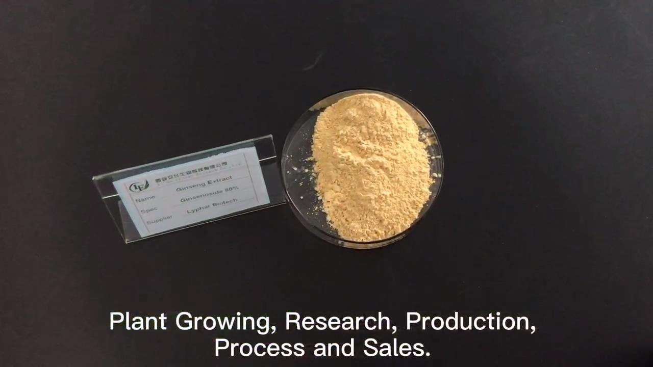 Panax Ginseng Extract Powder 80% Ginsenoside