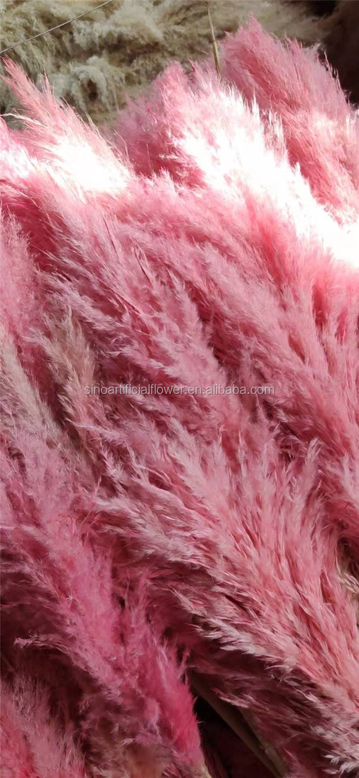 Hot sale preserved real flowers dried natual pampas grass flowers for display wedding decoration