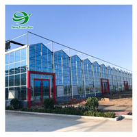Agriculture Vegetables hydroponic systems equipment Multi-Span Glass Greenhouse