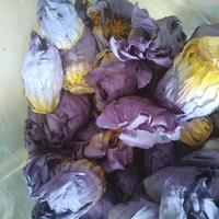 Fragrant bake Dried blue lotus tea Nymphaea calliantha Conard flowers