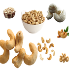 China Origin Cashew nuts /good price/raw cashew nuts for sale