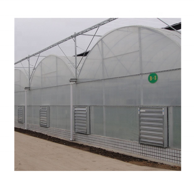 Professional Large Multi-span Tunnel Strawberry Hydroponics Plastic Multifunctional Automatic Agriculture Commercial Greenhouse