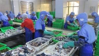 Çin ünlü konserve gıda uskumru balığı domates soslu