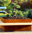 Modern Life Style Yard Decor Outdoor Plant Large Size Corten Steel Flower