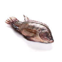 Fresh live good quality Natural Professional Frozen Tilapia Fish WR