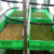NEWEEK hydroponic commercial bean sprout machine barley grass growing machine