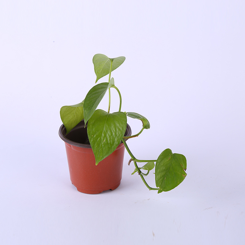 H477 товары для дома и сада разные размеры Детские суккуленты плантатор двойной цвет прочный пластиковый цветочный горшок