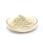 Dehydrated Garlic Powder/ Factory Supply