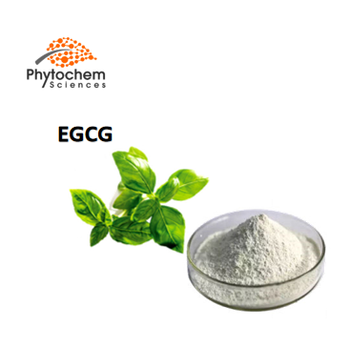 Hot Sale Slimming High Quality Powder Polyphenols Caffeine 98% Egcg Green Tea Extract