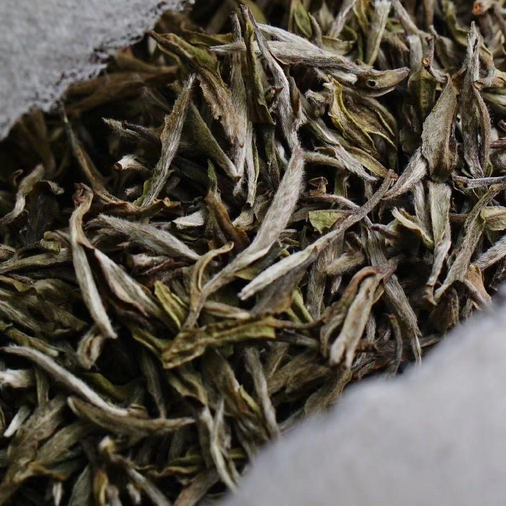 Wholesale white tea Fujian Organic Tea Pekoe - 4uTea | 4uTea.com