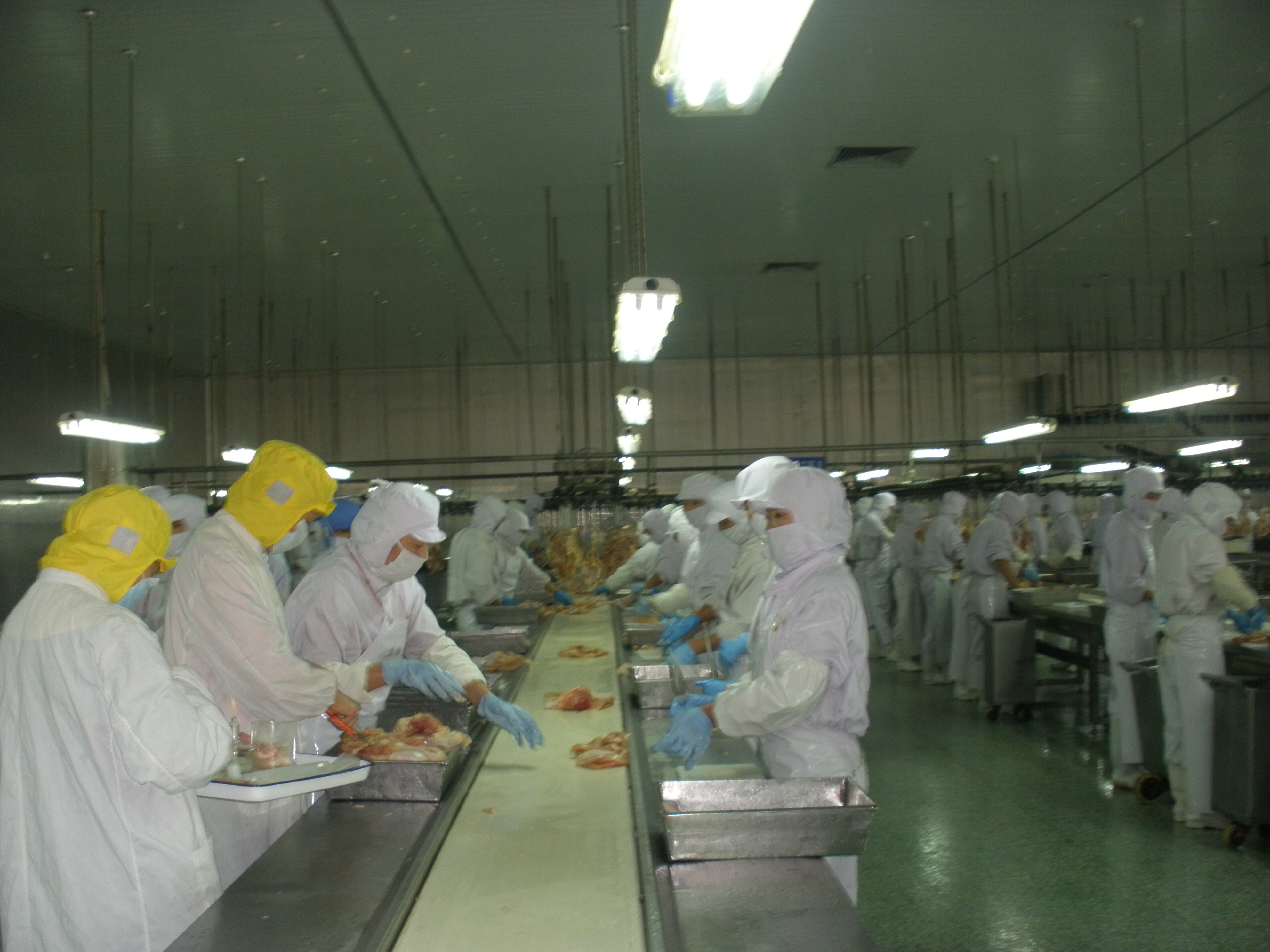 Different kinds of frozen whole fresh chicken quarter legs /feet and paws /griller /wing /price upper back for sale