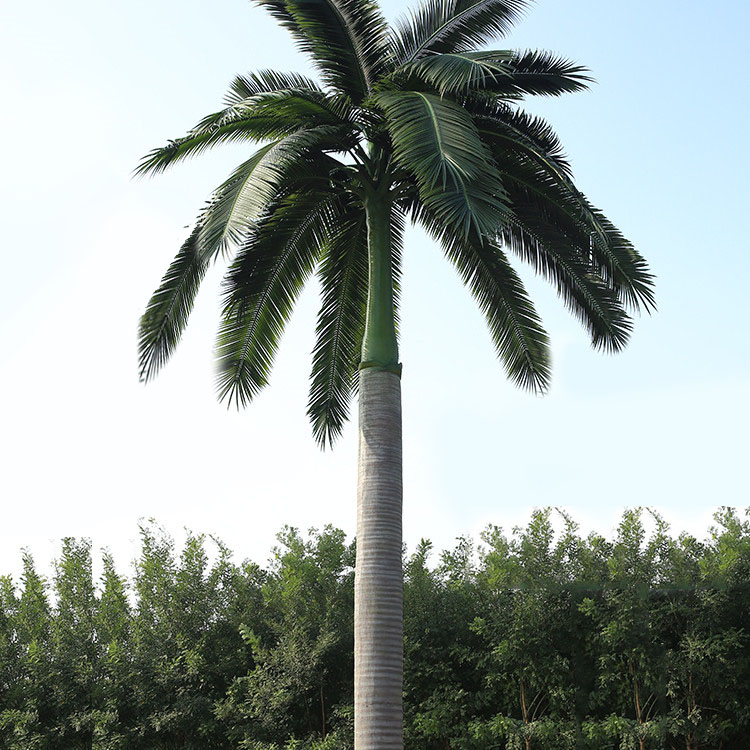 Business District Decoration Anti-fading Plastic Tree Tall Artificial Royal Palm Tree