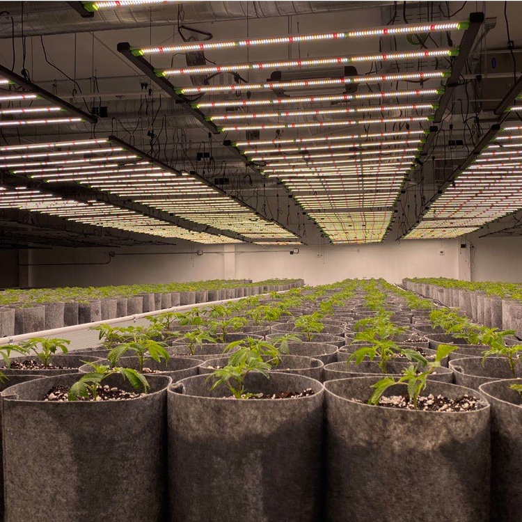 Samsung LM301H/301B 645w 720w 2000Umol/s Spider Bar Full Spectrum 660nm Indoor Plant Led Grow light