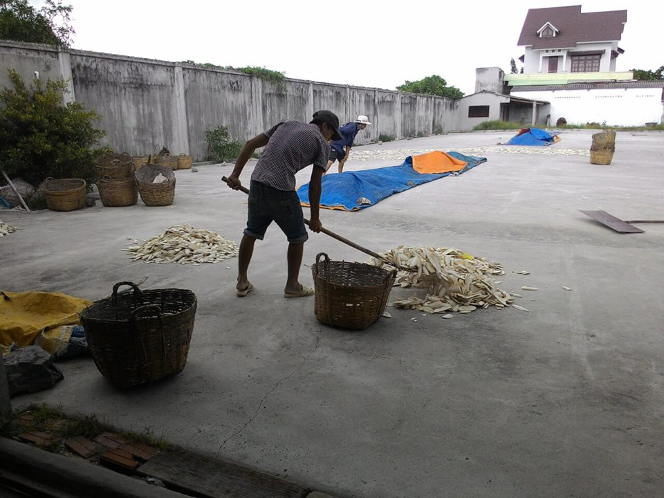 Cuttlefish Bone For Sale Year 2020