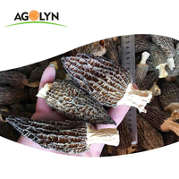 Wholesale Chinese Organic Food Fresh Morel Mushroom