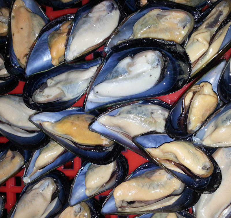 Frozen Cooked Half Shell Mussel