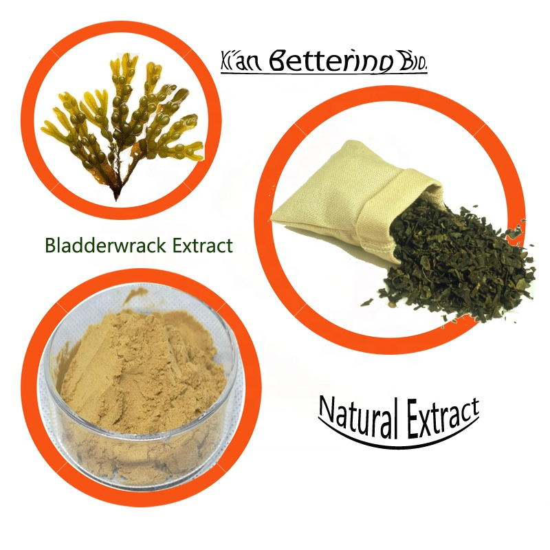 The capsule Irish Sea Moss Bladderwrack Burdock Root Extract